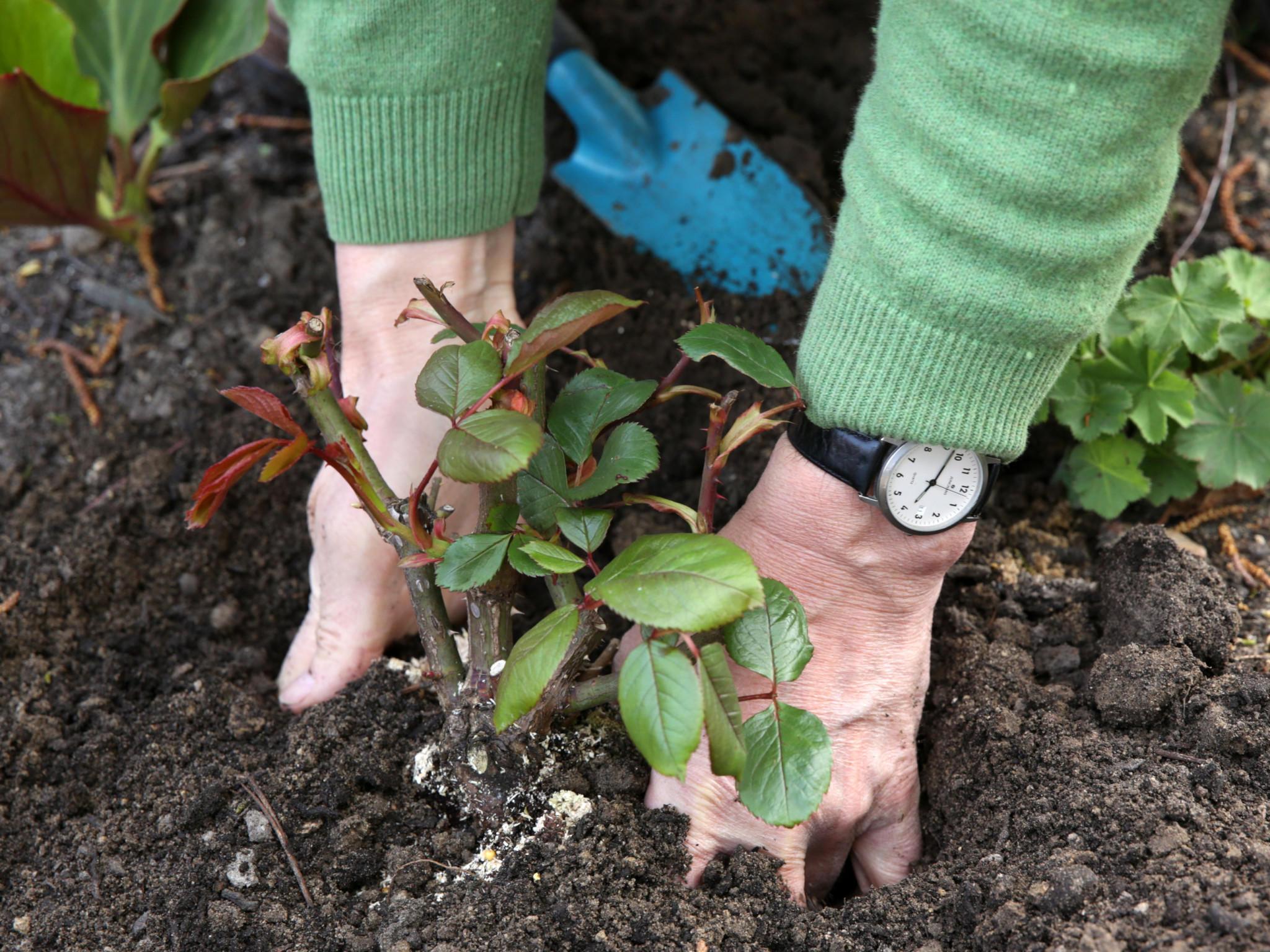 Gartentipps das ist im mai zu tun for Garten tipps