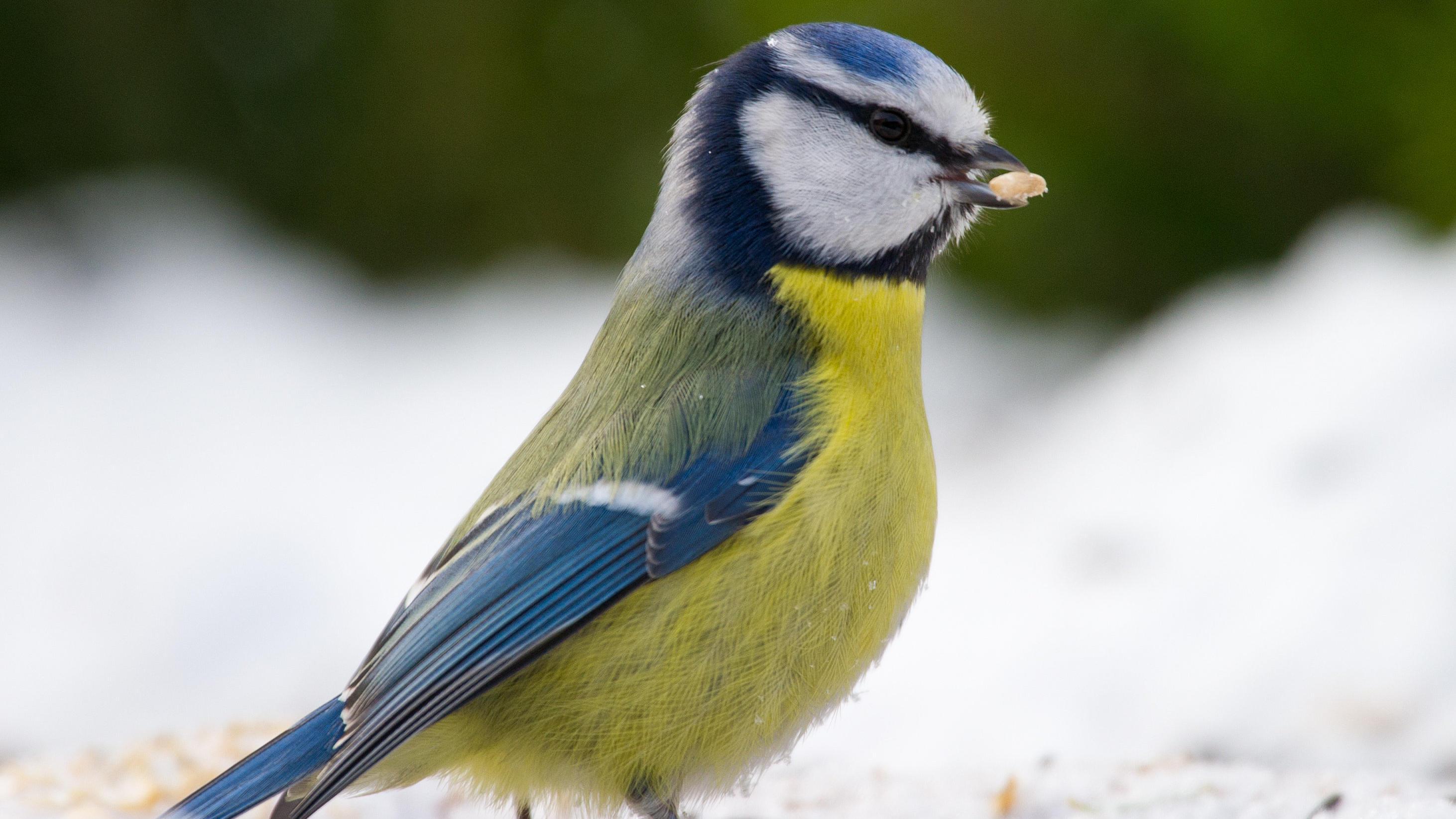 Mehr Vögel machen so glücklich wie eine Gehaltserhöhung