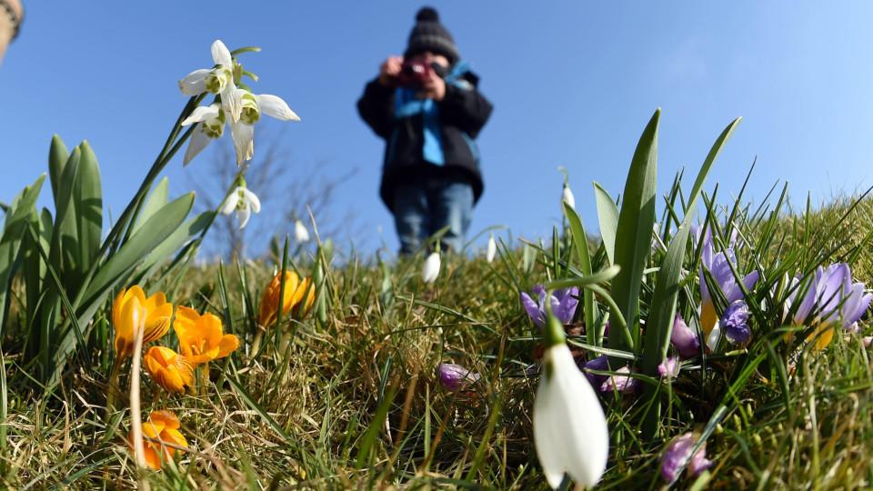 Die Pflanzen wissen, wann es Frühling wird - wetter.de