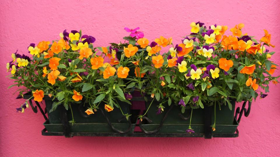 Blumenkasten Bepflanzen Tipps Für Den Balkon Und Die Terrasse