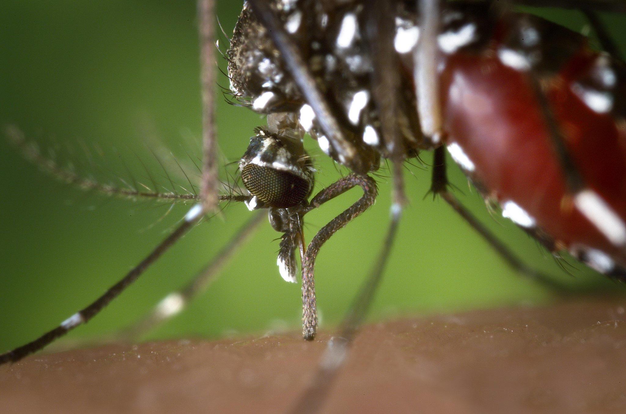 mit diesen pflanzen werden sie mücken los - wetter.de - Mücken Im Schlafzimmer