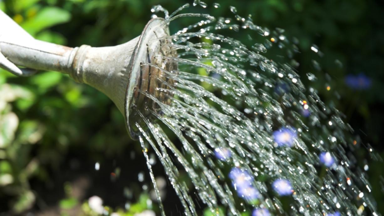 Sommer, Sonne, Hitze - was für uns Menschen anstrengend ist, macht auch unseren Pflanzen zu schaffen. Damit sie bei Temperaturen über 30 Grad nicht eingehen, müssen Pflanzen regelmäßig gegossen werden. Doch wann ist es am besten?Und wie viel?