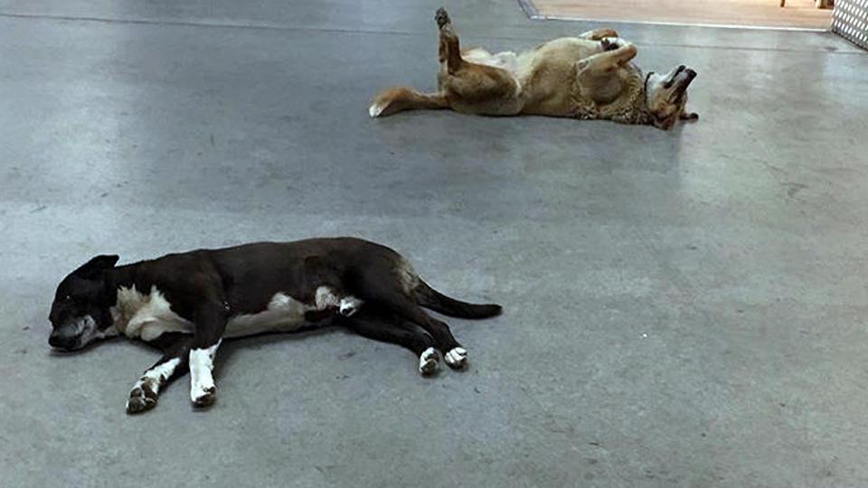 Ein Herz Fur Streuner Ikea Lasst Nach Regen Hunde Ins Geschaft