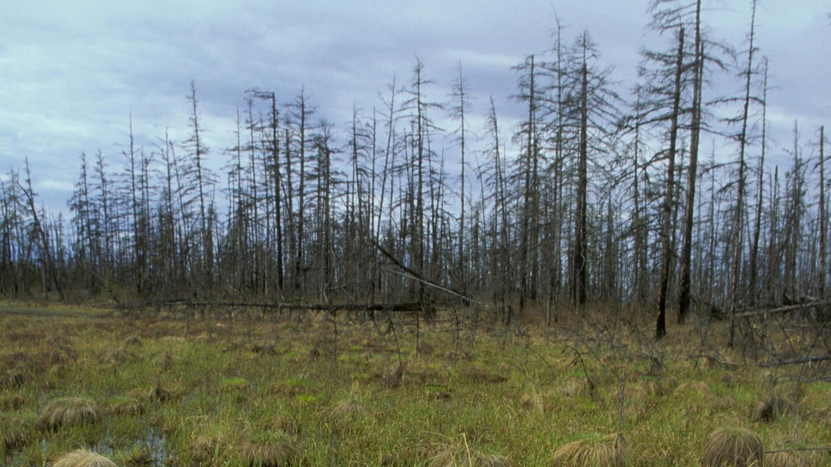 Waldbrände Alaska Karte.Arktische Hitzewelle Temperaturrekorde Und Waldbrände In Kanada