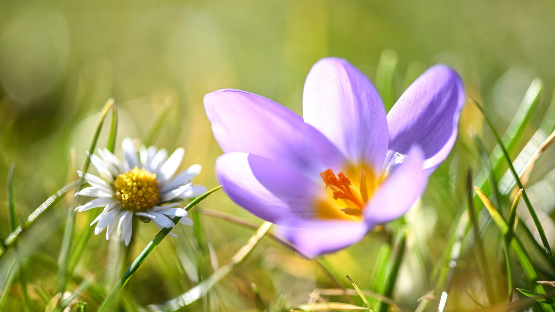 Frühlig