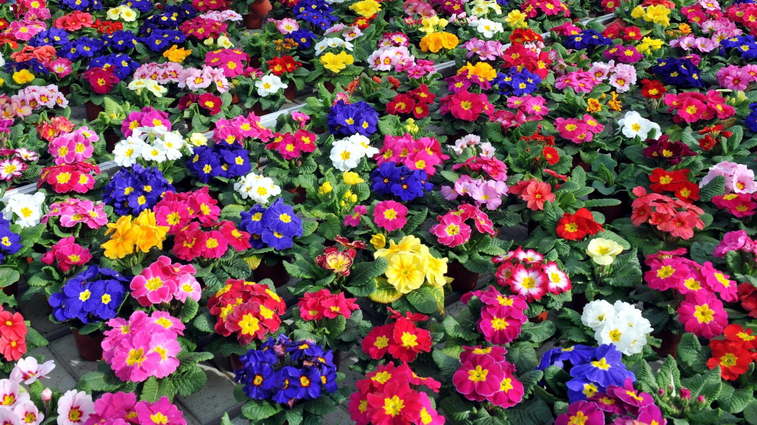 Berühmt Pflanzen für den Frühlings-Balkon: Welche Blumen können jetzt #XB_75