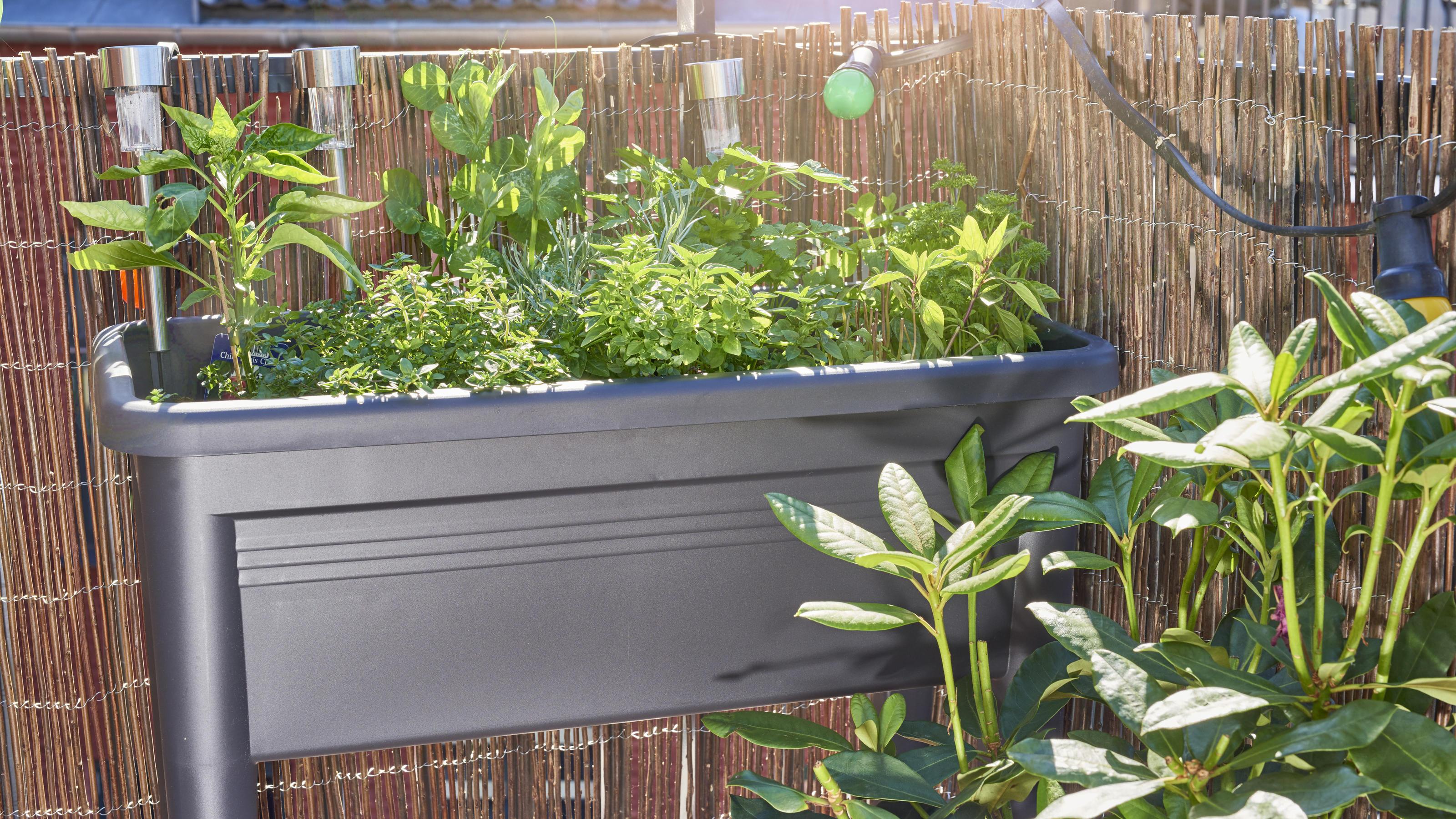 Ob Garten, Balkon oder Terrasse – Hochbeete sind echte ...