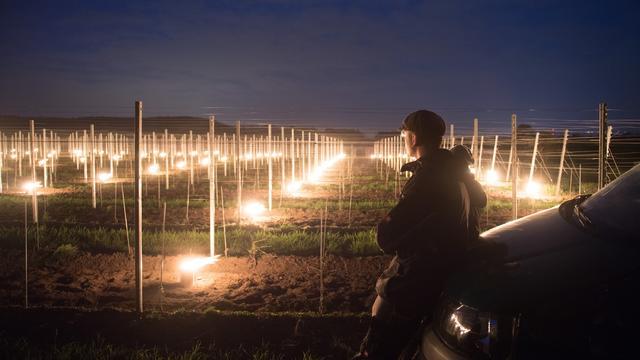 Nach zuletzt frostigen Nächten fürchten Weinbauern in Frankreich, aber auch in Kroatien um ihre Obsternte.  Auch in Deutschland sind die Nächte frostig. Müssen wir mit höheren Preisen für Obst und Wein rechnen? Es geht ums Ganze für die Winzer.
