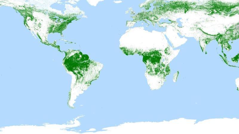 cdb5f0c16cd941 Erste weltweite Waldkarte aus dem All veröffentlicht - wetter.de
