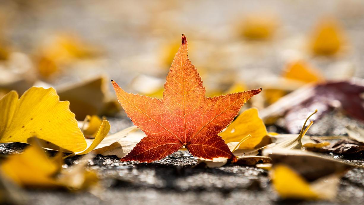 Der Start in die Herbstsaison hat unterschiedliche Daten. Da gibt es den kalendarischen und den meteorologischen Herbstanfang. Doch warum diese Unterscheidung. Wir klären auf.