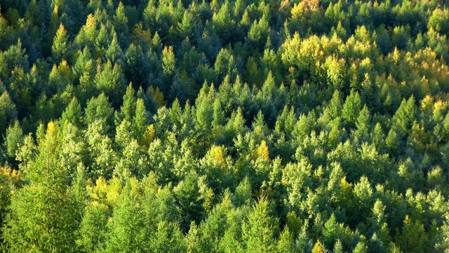 Wald kann den Klimawandel bremsen. Es gibt ein paar hoffnungsvolle Projekte. Auch in der Sahelzone. Da soll durch einen Waldgürtel die Ausbreitung der Sahara verhindert werden.