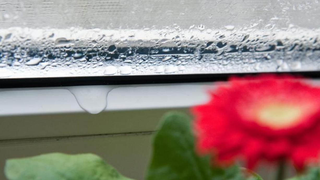 Jetzt, wo es kälter wird, fangen in unseren Wohnungen die Fenster wieder an zu schwitzen:Kondensation ist das Stichwort und diese kann Probleme verursachen.
