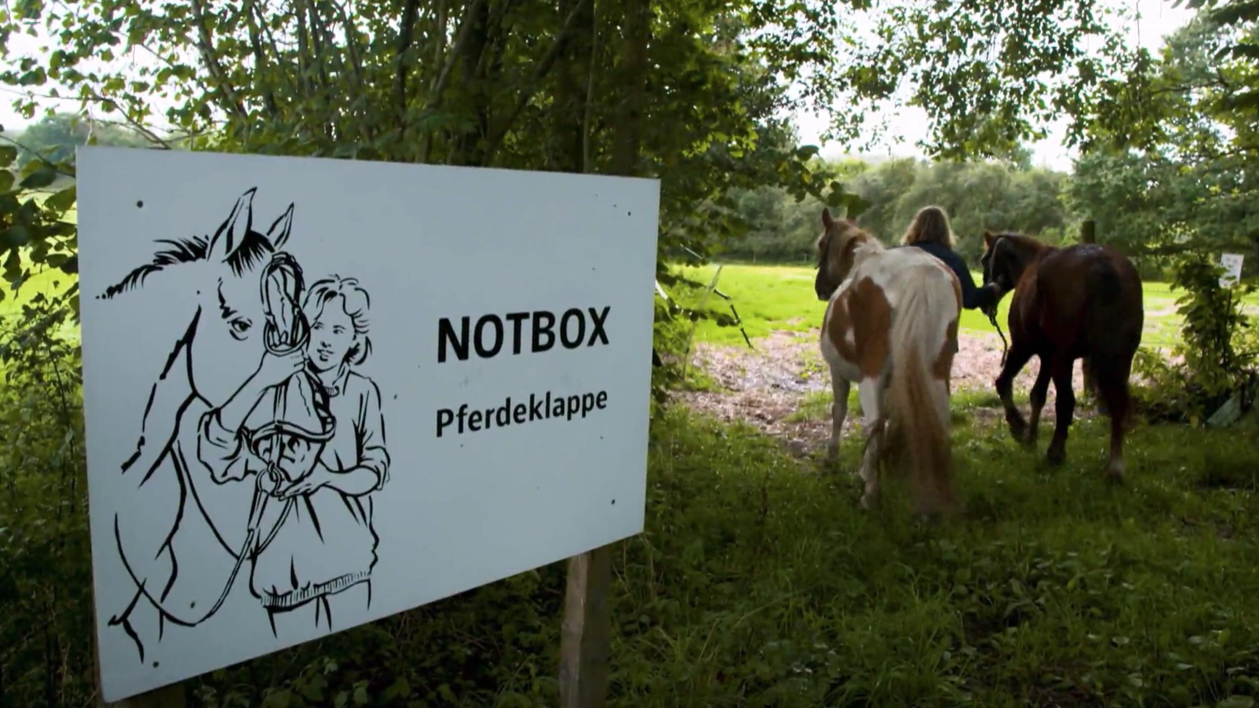 Pferdeklappe Schleswig Holstein Vermittlung