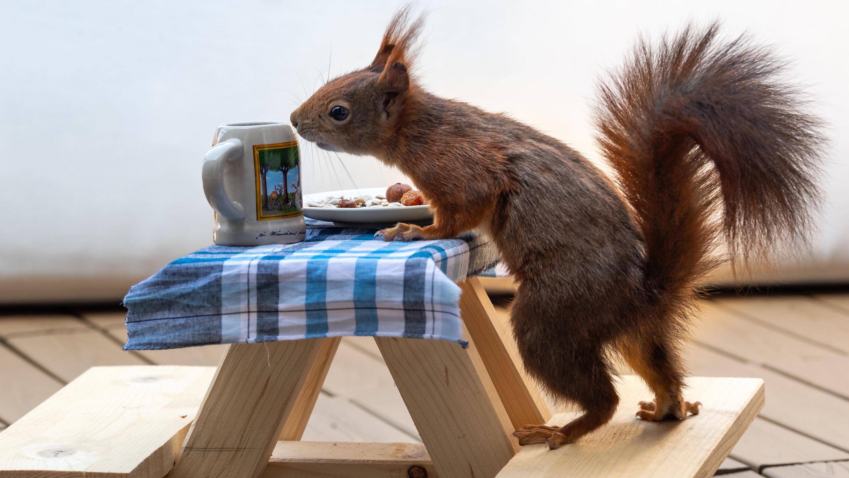 Eichhörnchen Gefährlich Für Menschen