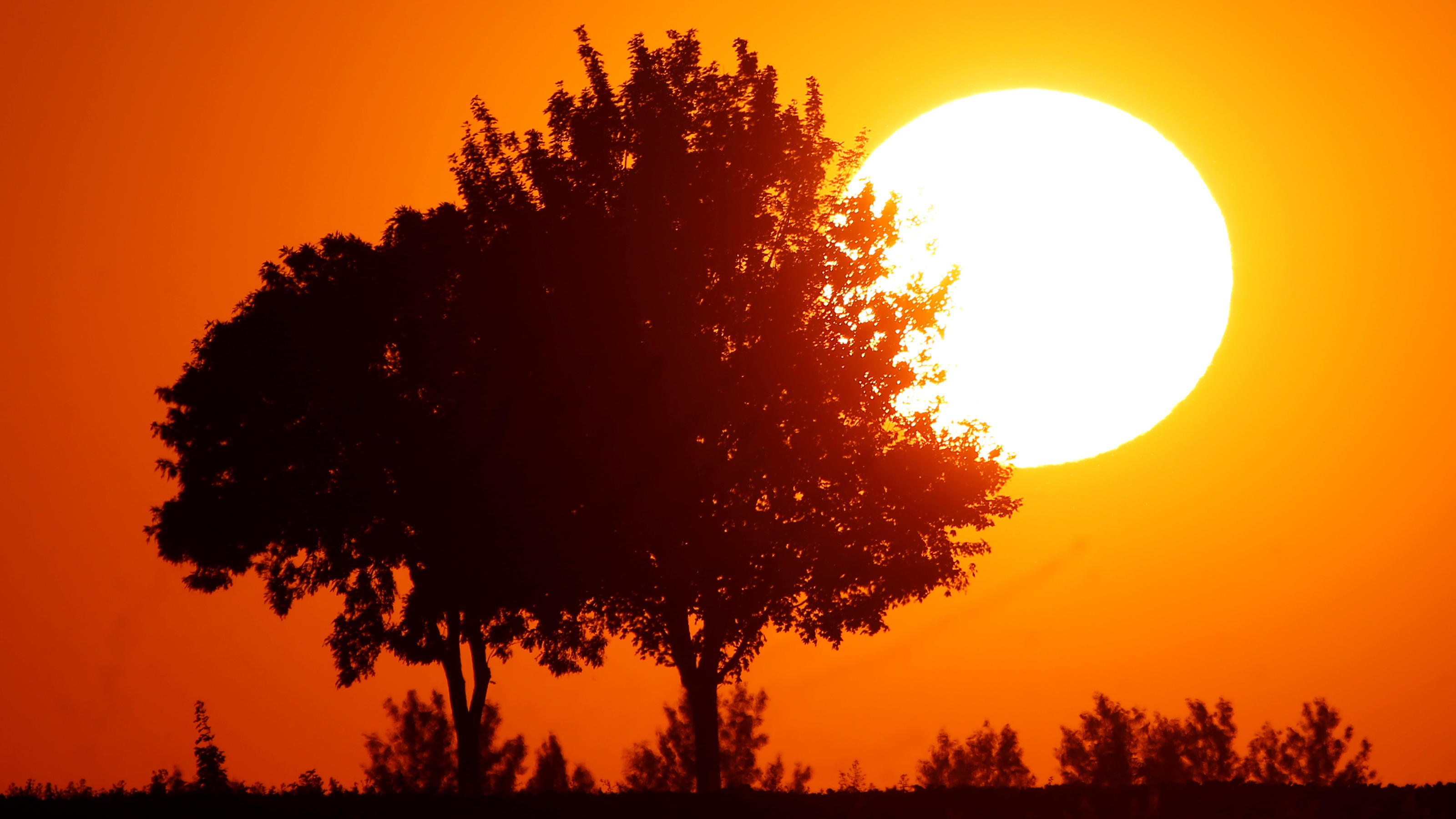 The sun sets behind a tree as a heatwave hits France, in Baralle, France, June 24, 2020. REUTERS/Pascal Rossignol