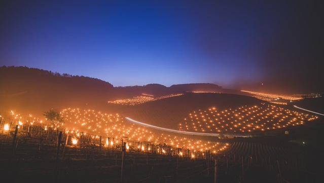 Ganze Landstriche sehen nach Festbeleuchtung aus, der Hintergrund dazu ist jedoch für die Landwirte eine ernste Angelegenheit. Aber warum?