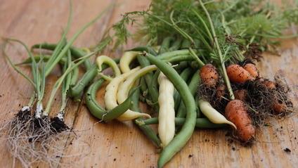 Lebensmittel, die biologisch angebaut wurden, helfen unseren Böden.