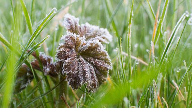 Geht's noch, April? Jetzt haben wir schon Mitte des Monats und die Temperaturen fallen so tief in den Frostbereich wie im Hochwinter. Den frostigsten Wert gab es auf der Zugspitze mit -17 Grad. Das soll jetzt der Tiefpunkt gewesen sein, bitte!