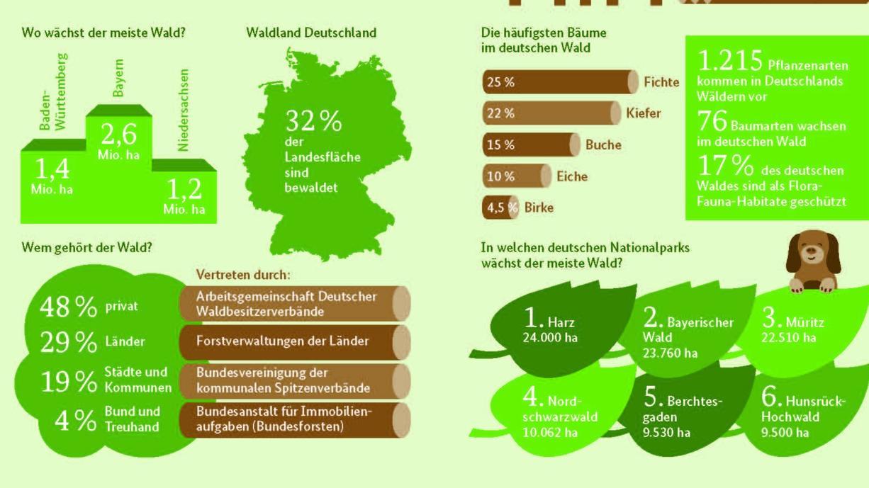 Der deutsche Wald ist ein Mythos, viel besungen und immer noch ein Sehnsuchtsort. Aber was ist der Wald eigentlich genau? Welches Bundesland hat den meisten Wald? Und welche Baumart dominiert? Hier die - überraschenden - Antworten.
