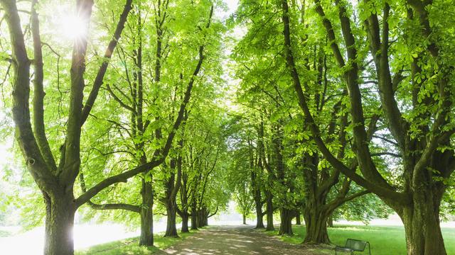 """Die Energie-Expertin Claudia Kemfert vom DIW erklärt dem """"Klima Update"""" im Interview, wann Baumpflanzaktion wirklich sinnvoll sind. Denn es lauern Gefahren."""