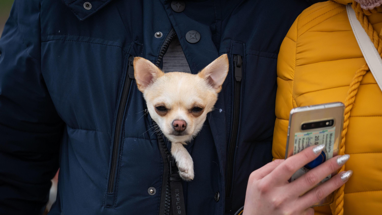 Frankfurt/Main: Ein kleiner Hund schaut aus der Jacke seines Besitzers