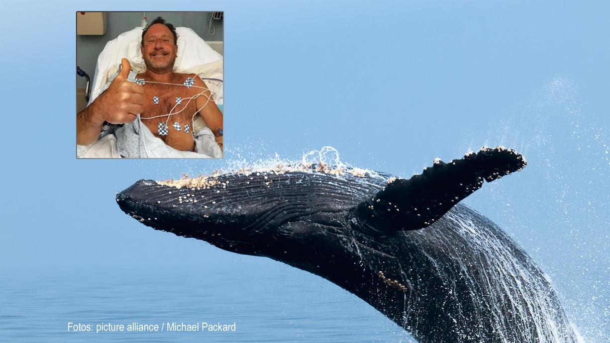 Normalerweise fängt Michel Packard Meerstiere, diesmal wurde er selbst gefangen. Sagt er. Der Hummerfischer geriet in das Maul eines Buckelwals, der ihn allerdings nicht fressen wollte, sondern wieder ausspuckte.