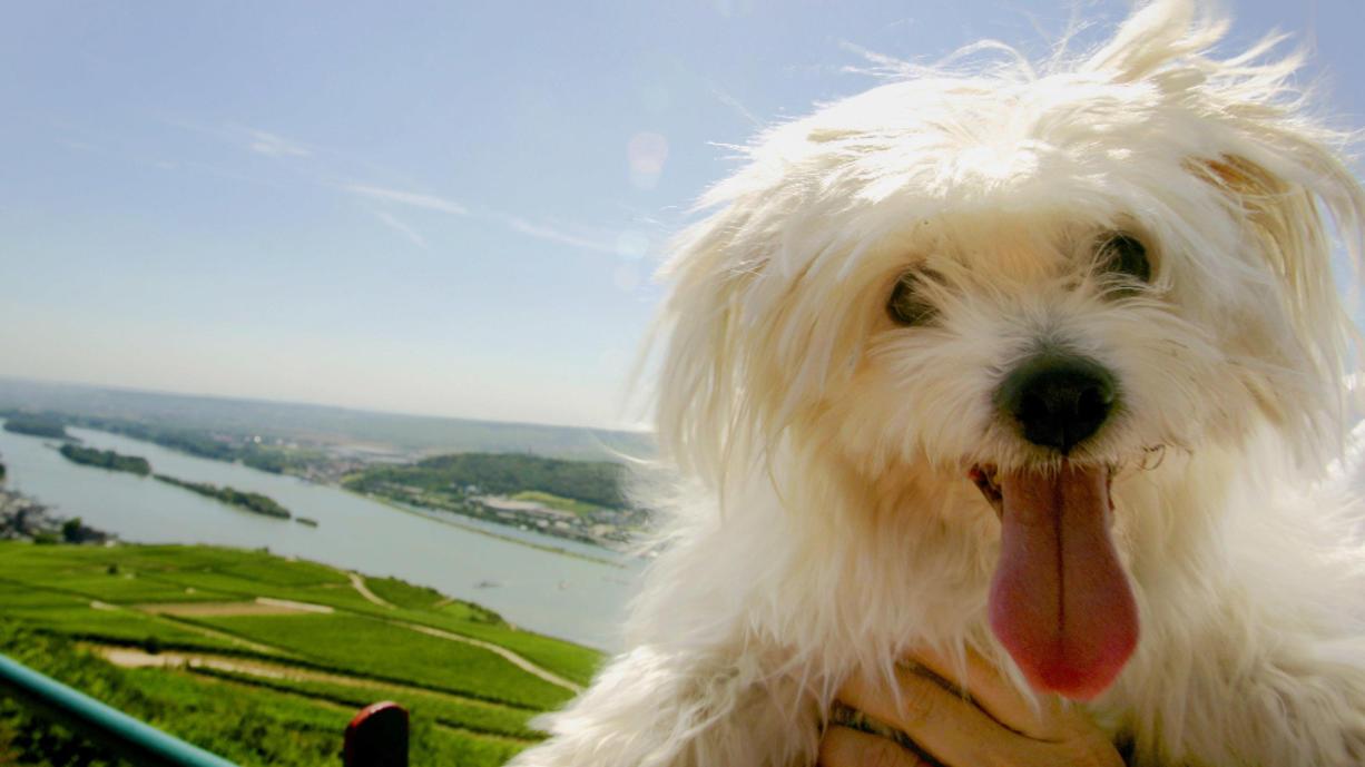 Jetzt kommen die Hundstage. Sie gehen vom 23. Juli bis 23. August und sind meistens ziemlich heiß. Wie sieht das in diesem Sommer aus?
