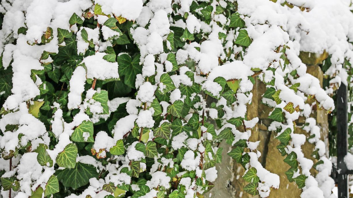 Da hat das Wetter seinen Plan aber ganz schön geändert. Vom Goldenen Oktober sind wir auf einmal ganz weit entfernt. Der Herbst stellt zum Monatsende seine Weichen direkt Richtung Winter. Schnee und Frost sind auch schon in Sicht!