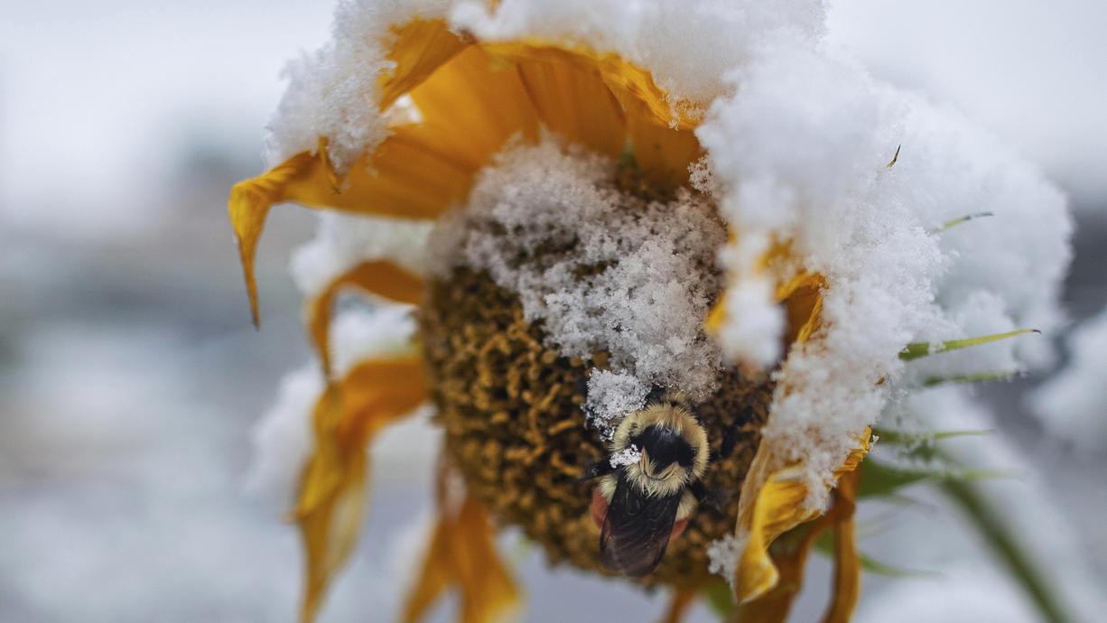 Das Wetter im Oktober ist extrem vielfältig. Denn es kann neben den goldenen Momenten, sprich dem Goldenen Oktober, auch die ersten kalten Einbrüche mit Frost und Schnee geben. Und dann kommen auch noch die typischen Stürme hinzu.