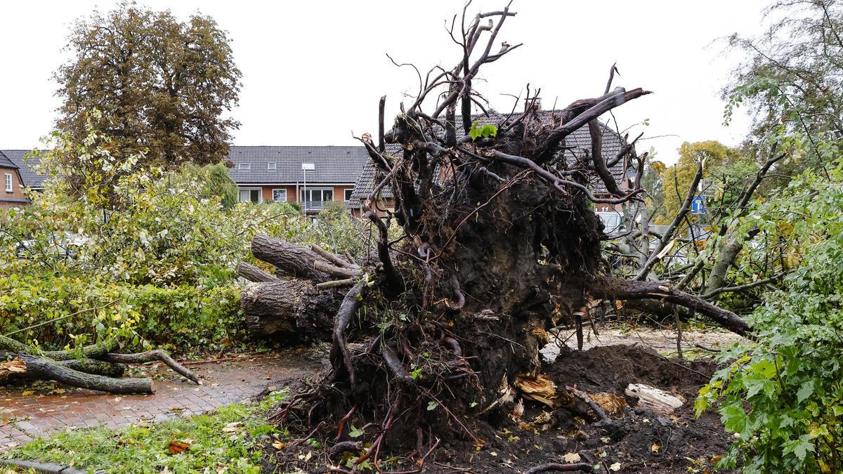 Wirbelsturm in Schwentinental: Schon wieder ein Tornado bei Kiel?