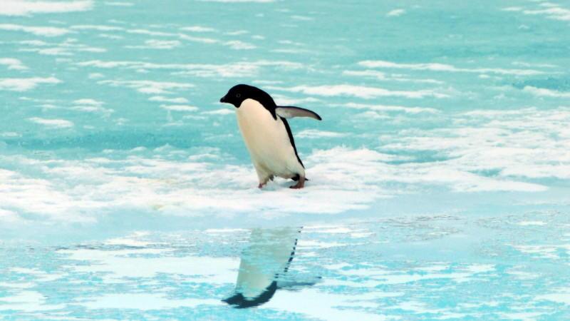 klimawandel in der antarktis bedroht die pinguine. Black Bedroom Furniture Sets. Home Design Ideas