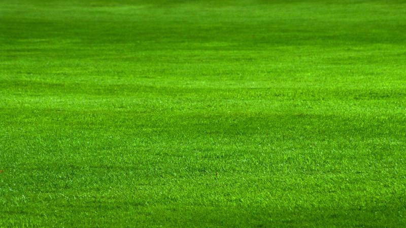 Mit Dieser Rasenpflege Wird Der Rasen Schön Dicht Und Saftig Grün