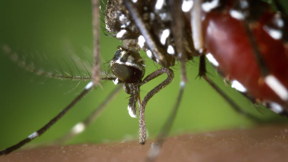 Mit Diesen Pflanzen Werden Sie Mücken Los Wetterde