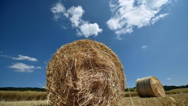 Den Sommer fest im Blick haben jetzt auch schon etliche unserer Bauernregeln. Wir schauen uns die Wetterregeln mal genauer an, die im späten Frühjahr und im Mai schon Aussagen über den Verlauf des Sommers zulassen.