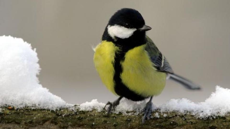 sollen vögel im sommer gefüttert werden