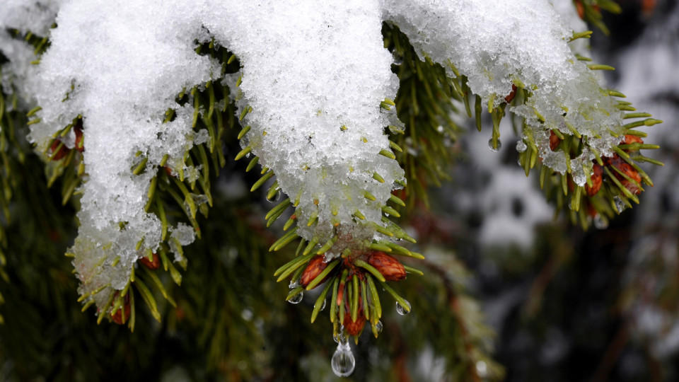 Schnee Schmilzt