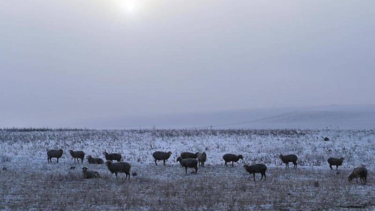 Jetzt kommt aus dem Nordwesten polare Meeresluft nach Deutschland. Schnee, Frost und Bodenfrost mischen wieder mit. Zum Wochenende beruhigt sich die Wetterlageund bietet uns das schon bekannte Duell von Nebel und Sonne bei 10 bis 15 Grad.