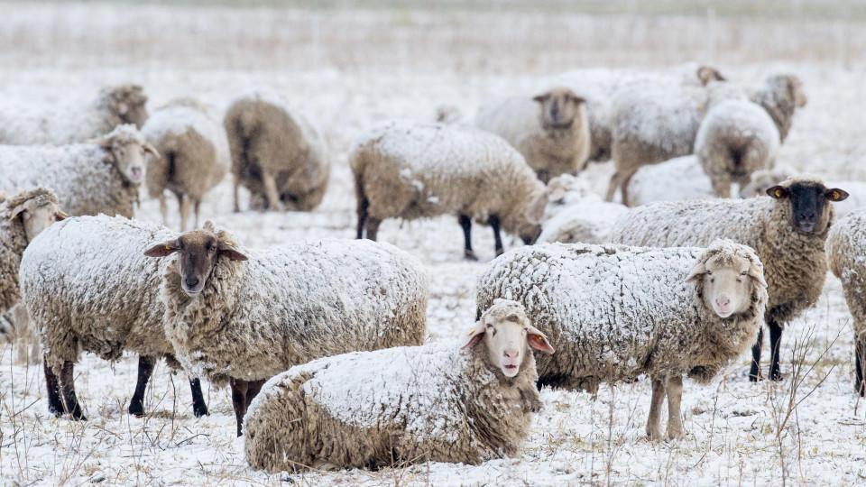 Schafskälte Wann