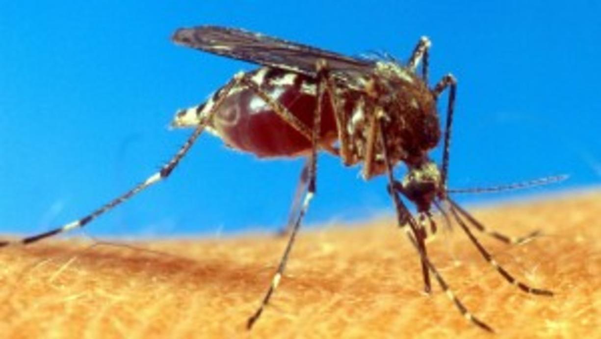 Nicht nur der Sommer läuft zur Hochform auf, sondern auch ein besonders fieser Plagegeist – die Mücke! Und die will uns vor allem die lauen Sommerabende beim Grillen oder im Biergarten so richtig vermiesen. Gibt es eine Mückenplage?