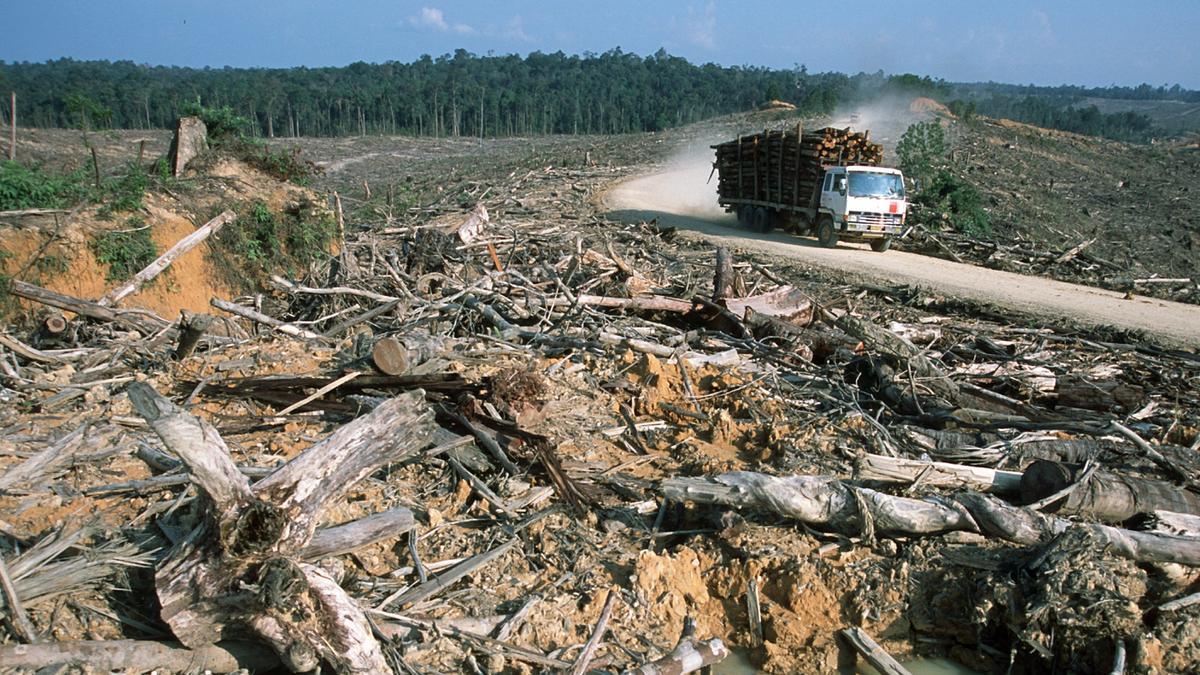 Ökozid: Gibt es bald ein Umwelt-Strafgericht?