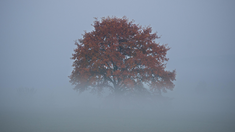 November Bilder
