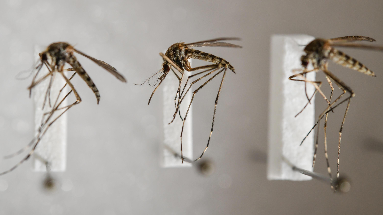 Pflanzen Gegen Mücken Und Fliegen   Die schönsten Einrichtungsideen