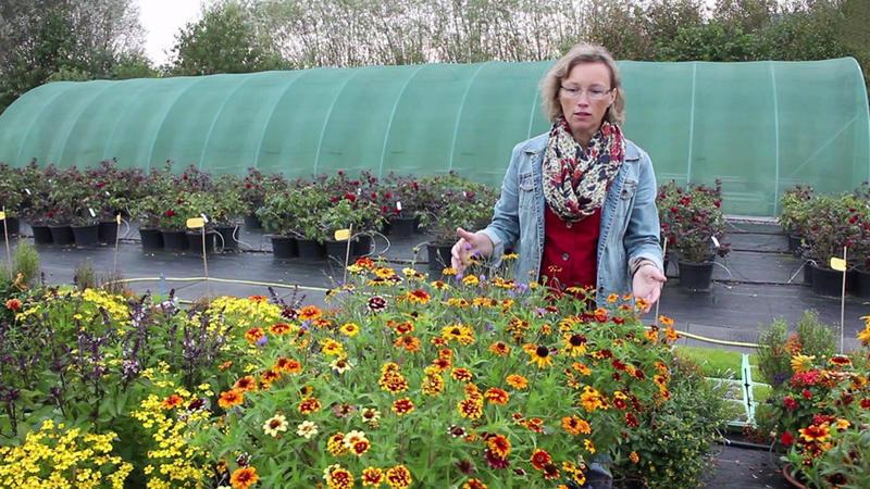 Blumenkasten Bepflanzen Tipps Fur Den Balkon Und Die Terrasse